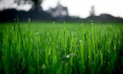 Close up of blades of grass